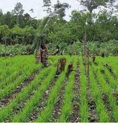 Agriculture pérenne : reverdir le paysage africain