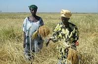 Réforme foncière : Le Cncr dépoussière les propositions paysannes de 2004
