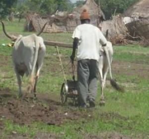 Le Cncr veut reprendre en main les destinées agricoles