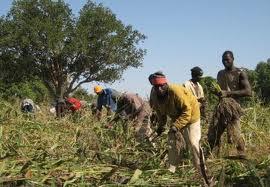 6 Fiches d'expériences OP - Afrique de l'Ouest - 2011