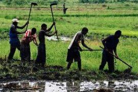 Panel Echanges sur les enjeux et défis de l'agriculture : Les candidats dévoilent leur vision du monde rural