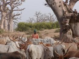 Lait en poudre importé versus production locale en Afrique de l'Ouest : vers un nouveau modèle industriel ?
