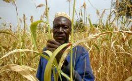 Sécurité alimentaire : La Cedeao mise sur le système d'information agricole