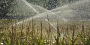 Les prix alimentaires mondiaux au plus bas depuis septembre 2010