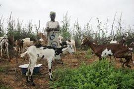 Agissons maintenant contre la famine et la crise alimentaire au Sahel