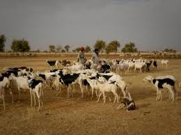 Réflexions basées sur un examen multi organismes de la crise alimentaire au Sahel