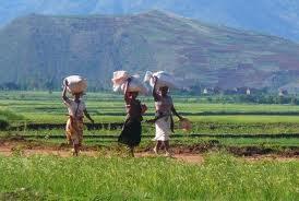 Fonds de développement agricoles malgaches : guide d'accès au FRDA