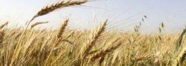 Presse : Prix agricoles : la France veut des stocks stratégiques