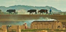 Article CGAP : quelles politiques pour que la microfinance marche pour les paysans (anglais)?