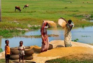 Article CGAP : qu'est-ce qui nous empêche d'innover en finance rurale? (anglais)
