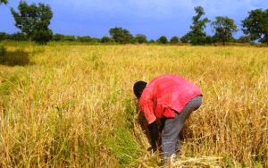 Article : La question foncière en Afrique à l'horizon 2050. Par Alain Durand-Lasserve