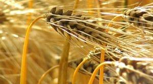 Bulletin hebdomadaire d'information sur le marché agricole au Burkina Faso