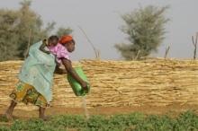 Rapport de la FAO sur les investissements dans les pays en développement :  Trends and Impacts of Foreign Investment in Developing Country Agriculture