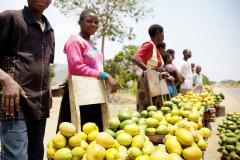 Nouvelle alliance mondiale pour la sécurité alimentaire et la nutrition : cadres de coopération des pays pilotes