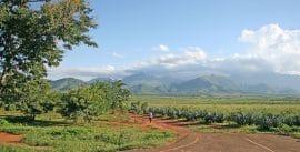 Article Contrepoints : Pas de vraie agriculture sans propriété privée