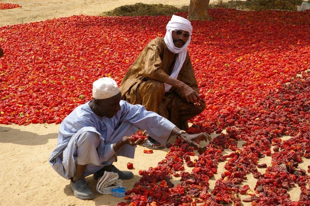 Bulletin de veille n°208 - Spécial Financement agricole, décembre 2012