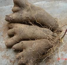 Évolution des systèmes de production de l'igname dans la zone soudano-guinéenne du Bénin