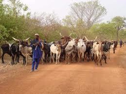 Changements spatiaux et pratiques pastorales : les nouvelles voies de la transhumance dans l'Ouest du Burkina Faso