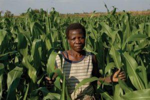 D'où vient l'échec ? Les leçons de la crise alimentaire au Malawi