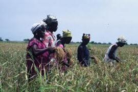 Appel à communications / Colloque Droit des sociétés coopératives OHADA / 18 et 19 juin 2013 / Yaoundé (Cameroun).