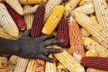 L'indice FAO des prix alimentaires a fléchi de 7 pour cent en 2012