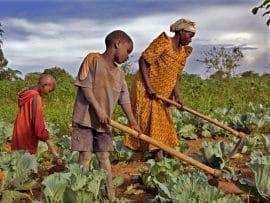 L'OIT considère que l'agriculture doit être la priorité économique numéro 1 de l'Afrique