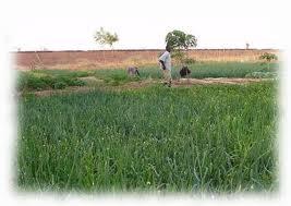 Burkina : G8 en avant pour une sécurité alimentaire