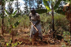IATP : Land Grabs and Fragile Food Systems