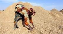 Article Sénégal : L'arachide