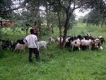 Comité de pilotage du processus foncier : des organisations paysannes sous représentées
