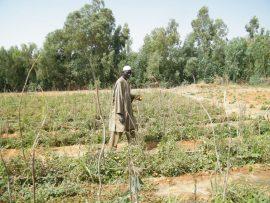 Débat Inter-réseaux : la bonification des taux d'intérêt pour le développement des crédit agricoles