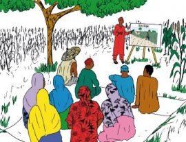 Fiche : Champ école paysan