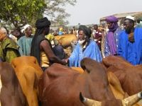 Rapport Cilss - Usaid : Intra regional trade of Agro - pastoral products in west Africa