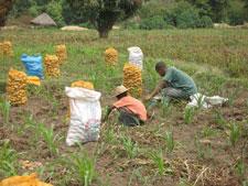 Evénement : Table ronde pour l'adoption du Pacte régional de partenariat pour la mise en œuvre du PDDAA en Afrique Centrale