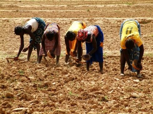 Analyse: Solutions à court terme — les déboires de l'agriculture en Afrique de l'Ouest
