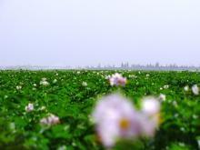 Article: Le coût de la politique agricole israëlienne