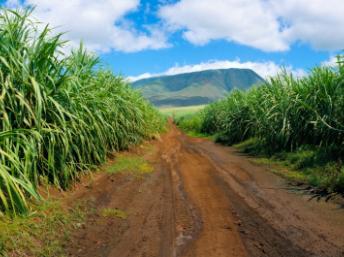 RFI - Agriculture : l'Afrique est à la traîne