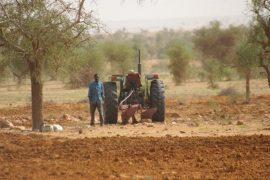 Presse - Autosuffisance alimentaire en Guinée : L'agriculture