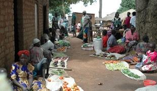 Rural 21 : Protection sociale et sécurité alimentaire – quels sont les systèmes qui sont efficaces ?