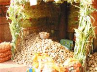 Article Rural 21 : La pomme de terre – parent pauvre de la politique alimentaire