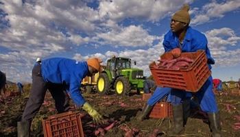 L'Agra lance son premier rapport sur l'agriculture en Afrique