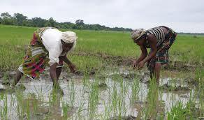 Nigeria : Les agriculteurs recherchent de financement privé