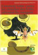 Comment lutter contre les mouches des fruits infestant les mangues