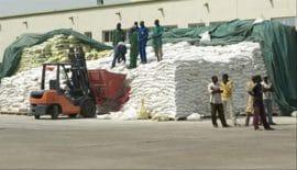 Agriculture en Afrique de l'ouest : Ces engrais qui manquent cruellement