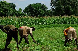 10 ans après la Déclaration de Maputo: Paysans et éleveurs d'Afrique, de l'espoir à la désillusion