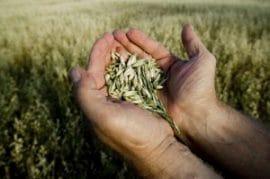 Note – Pour un secteur des semences diversifié et innovant