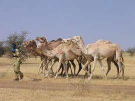 Presse : Plaidoyer pour la prise en compte de la résilience dans la SCADD (Burkina Faso)