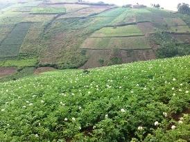 Des partenariats multi-acteurs en recherche agricole pour le développement : étude de cas au Burundi