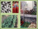 Exploitations familiales au Sénégal : La grande mamelle nourricière