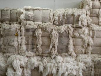 RFI : Les producteurs africains de coton désormais confrontés aux subventions en Asie